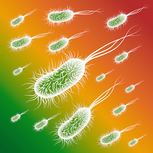 Group of the E coli Bacteries on color background