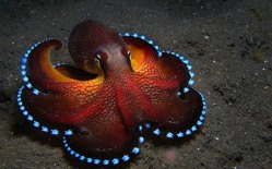 glow-in-the-dark-octopus
